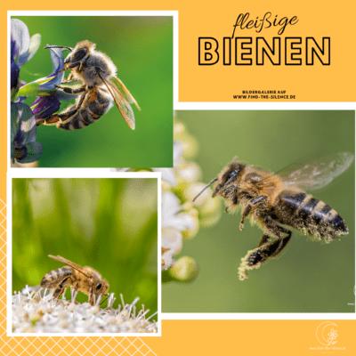 meine kleine Sammlung an Bienenbildern