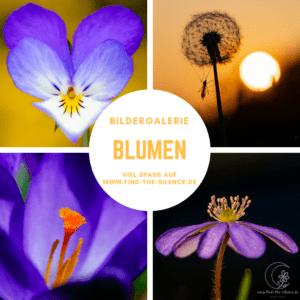 Blumen-Galerie