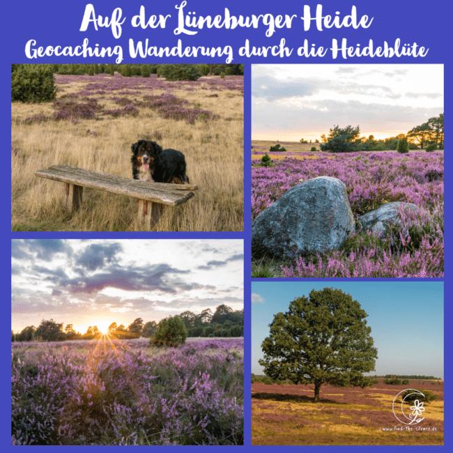 Auf der Lüneburger Heide - Geocaching