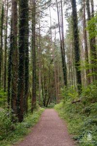 Wald - das ist die Eifel
