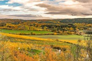 Wein, Wald und wundervolle Farben!